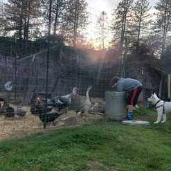 Vega feeding the chickens with cameron