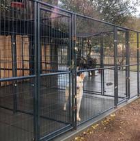 spacious kennels