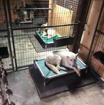 dogs enjoying new beds