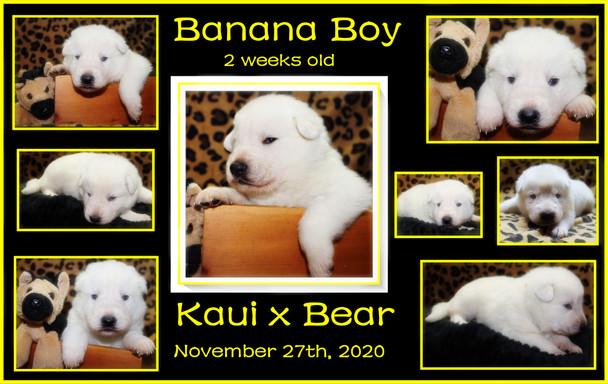 banana boy 2weeks.JPG