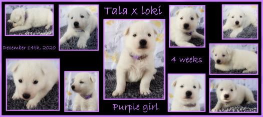 purple white girl 4 week.JPG