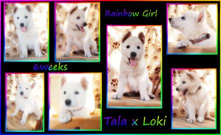 rainbow 6 weeks.JPG