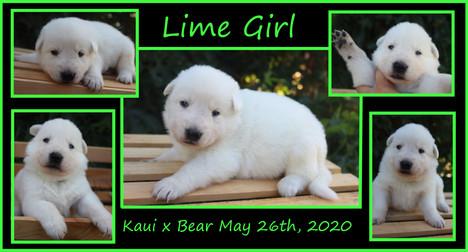 lime girl 3 weeks.JPG