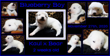 blueberry boy 2 weeks.JPG
