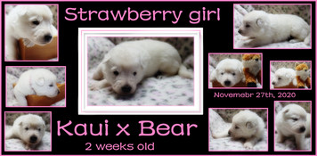 Strawberry girl 2 week.JPG