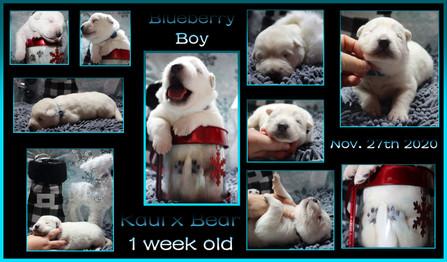 Blueberry boy 1week.JPG