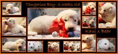 Tangerine boy 3 weeks.JPG