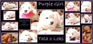 purple white girl 2 week.JPG