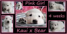 pink 4weeks.JPG