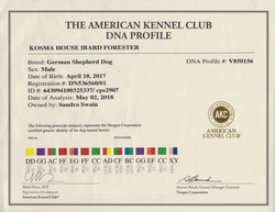 loki DNA