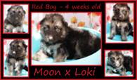 red boy 4 weeks.JPG