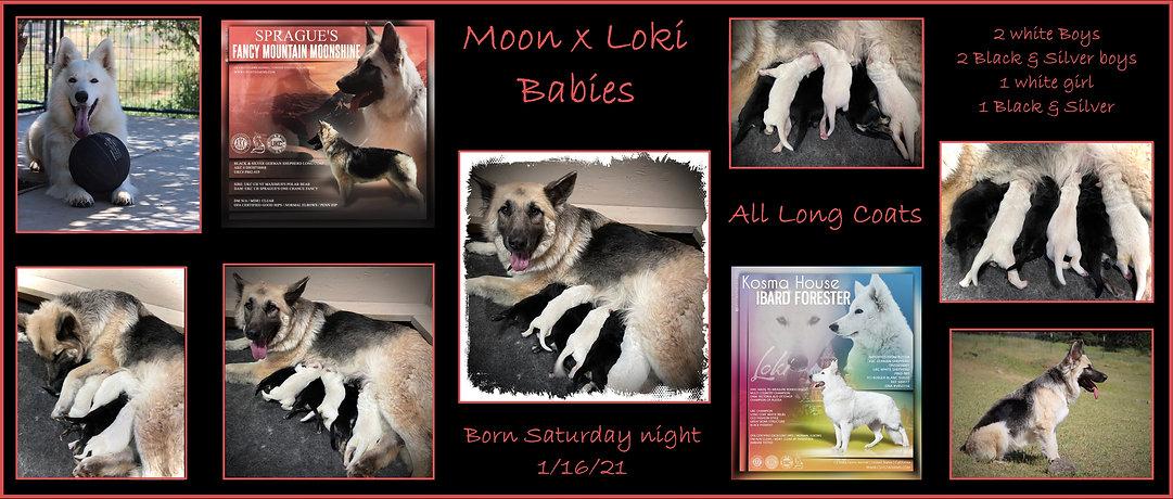 Moon x Loki annoucement 1-16-21.jpg