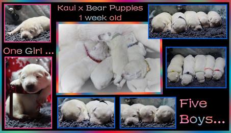 Kaui x Bear 1 week old.JPG