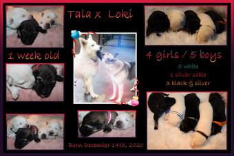 tala x loki 1 week old.jpg