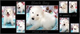 black boy 4 weeks.JPG