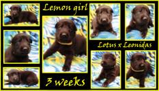 lemon girl 3 weeks.JPG