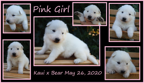 pink girl 3 weeks.JPG