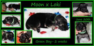 green boy 2wks.JPG