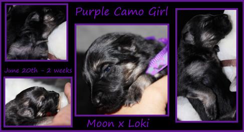 purple camo girl 2 wks.JPG
