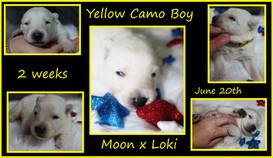 Yellow camo boy 2 weeks.JPG