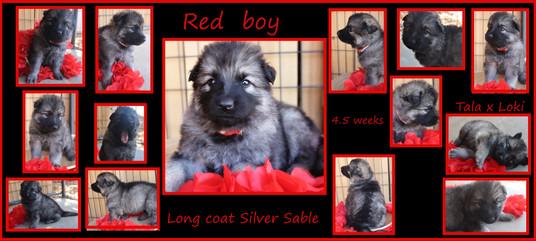red boy 4.5 weeks.JPG