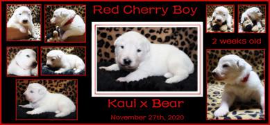 cherry boy 2 weeks.JPG