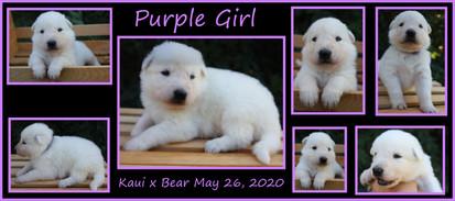 purple girl 3 weeks.JPG