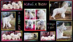 kaui x bear 4 weeks group.JPG