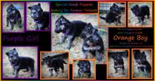 purple,orange special needs pups 5 weeks