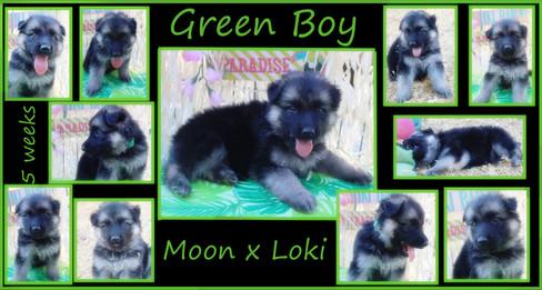 green boy 5 weeks.JPG