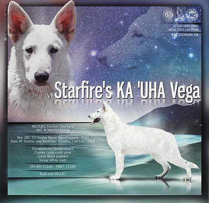 Vega (1).jpeg