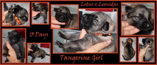 Tangerine girl 13 days.JPG