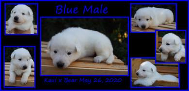 blue male 3 weeks.JPG