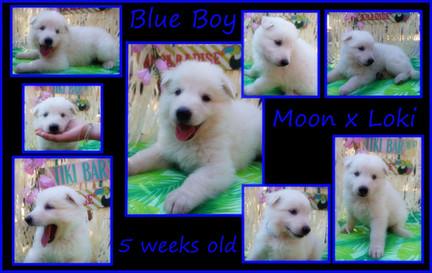 blue 5 weeks.JPG