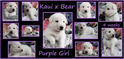 purple 4 wks.JPG