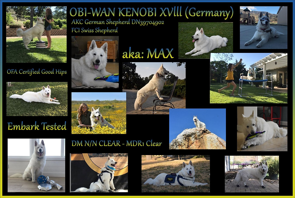 MAX Collage page.jpg