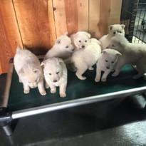 puppies love it!