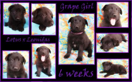 grape 6 weeks.JPG