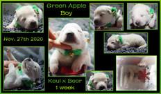 Green apple boy 1 week.JPG