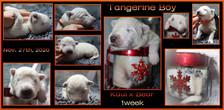 Tangerine boy 1week.JPG