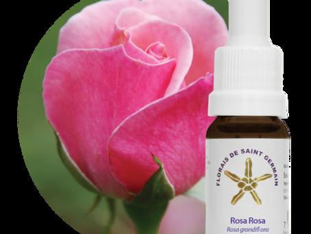 Essência floral Rosa Rosa