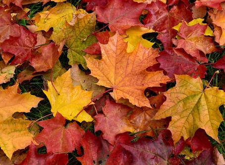 Adjusting for Autumn