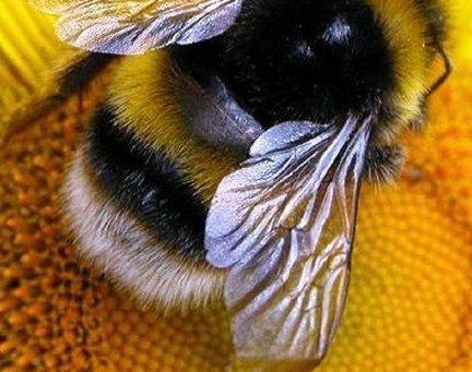 5 ways we can help save the Bees