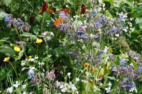 Graines de fleurs pour les abeilles  1kg