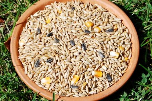 20kgMélange de grains sans Avoine
