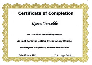 animal communication course.jpg