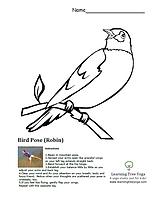 Bird Robin Pose.png