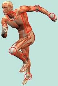 curso de anatomia, curso de fisiologia, anatomia. fisiologia