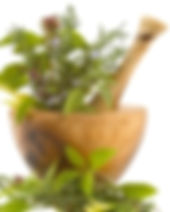 casa da terra, Casa da Terra, fitoterapia, curso de fitoterapia, pós em fitoterapia, pós graduação em fitoterapia, plantas medicinais, ervas medicinais