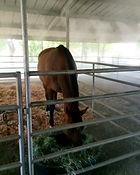 horse stable misting.jpg